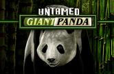 Untamed Giant Panda онлайн в Вулкан Удачи